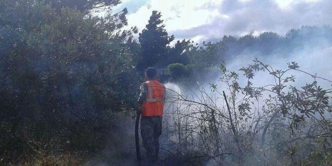 إخماد ستة حرائق طالت أشجاراً مثمرة حراجية بريف حمص