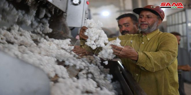 أكثر من 4 آلاف طن كمية الأقطان المستلمة في محالج المؤسسة العامة لحلج وتسويق الأقطان