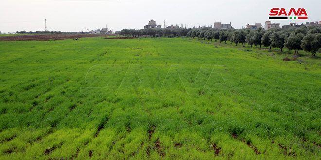 فرع إكثار الحسكة يبدأ التعاقد مع الفلاحين لزراعة محصولي القمح والشعير