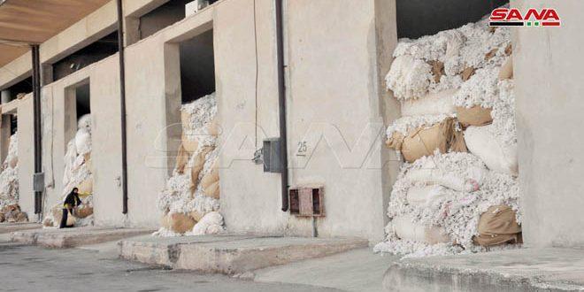 محلج الوليد بحمص يستلم 700 طن من الأقطان المحبوبة من المنطقة الشرقية