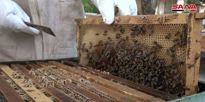 إجراءات فورية تسهم بالحد من خسائر قطاع تربية النحل باللاذقية
