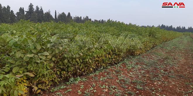 مركز المختارية الزراعي في حمص ينتج 500 ألف غرسة مثمرة سنوياً