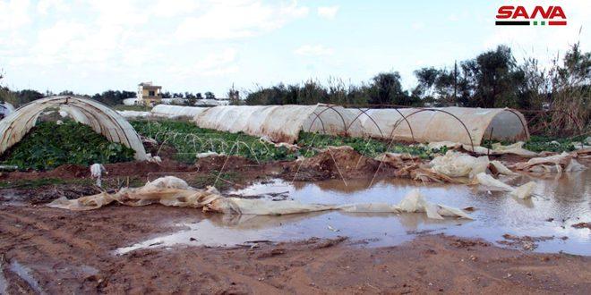 مزارعو منطقة الهيشة بطرطوس يطالبون بتعويضهم عن الأضرار الناجمة عن التنين البحري