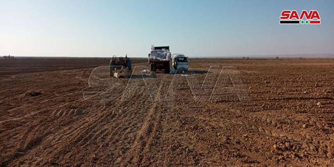 فلاحو منطقة البيارات الغربية بريف تدمر يواصلون زراعة القمح رغم الصعوبات