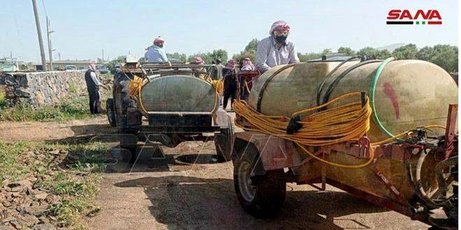استمرار عمليات رصد ومكافحة الجراد الصحراوي في دمشق وريفها