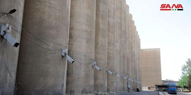 السورية للحبوب تستكمل التحضيرات لموسم القمح وتخصص 450 مليار ليرة لتسديد أثمان المحصول وتجهيز مراكز الاستلام