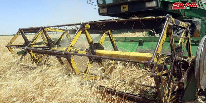 عمليات حصاد القمح مستمرة بوتيرة جيدة في دير الزور