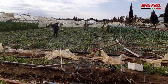 الموافقة على تعويض الفلاحين المتضررين من الظروف الجوية بطرطوس