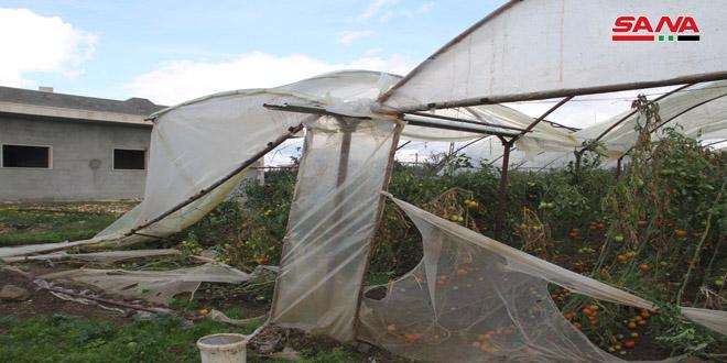 طرطوس.. بدء عمليات صرف الدفعة الأولى من التعويضات لمزارعي البيوت البلاستيكية