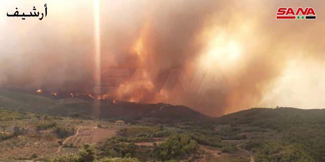 إصابة مواطن وأضرار تجاوزت 200 دونم حصيلة نحو 12 حريقاً باللاذقية