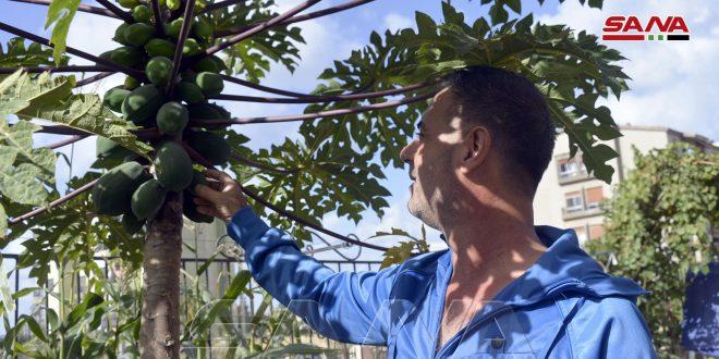 استثمار حديقة منزلية بزراعة الخضار والفواكه